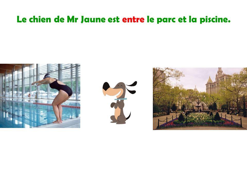 Le chien de Mr Jaune est entre le parc et la piscine.