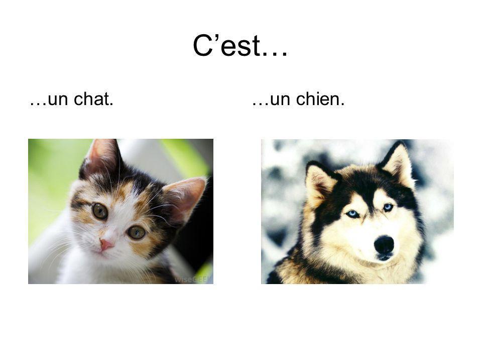 C'est… …un chat. …un chien.