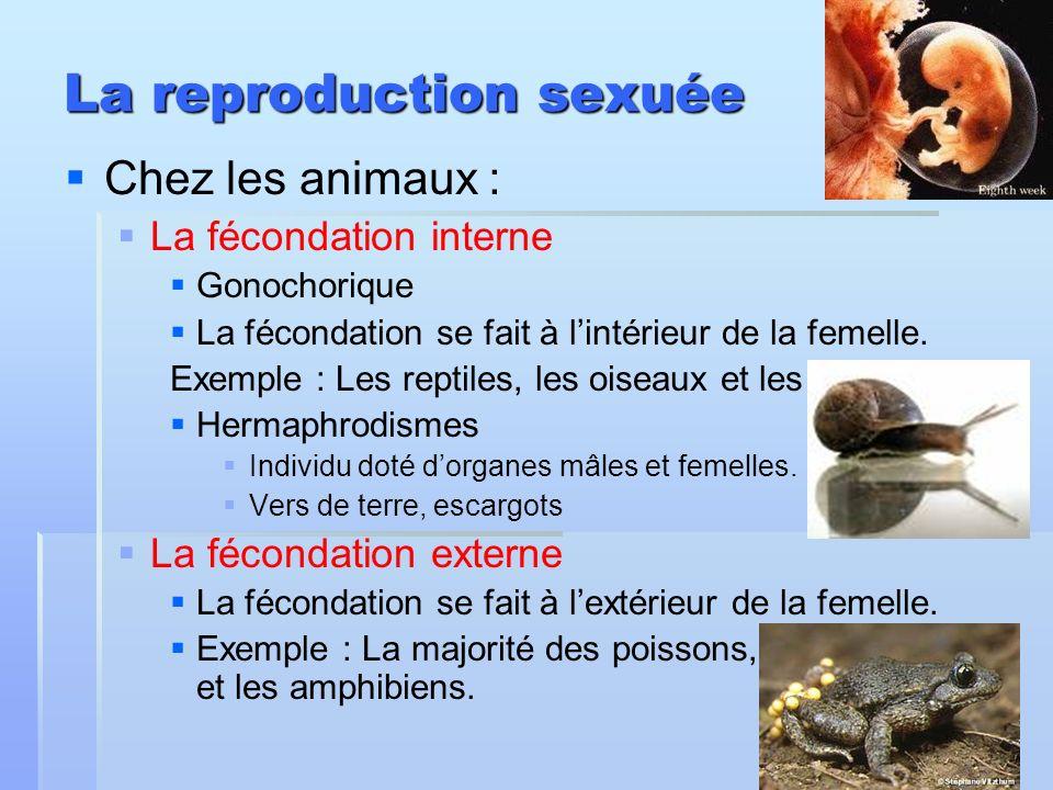 La reproduction sexuée