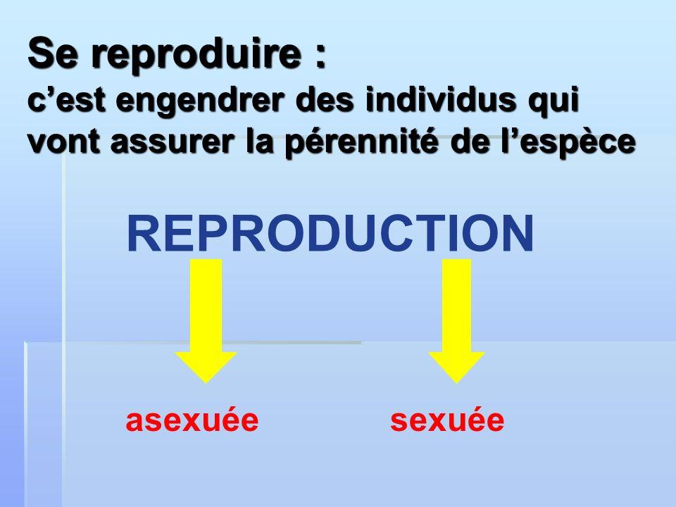 REPRODUCTION Se reproduire :