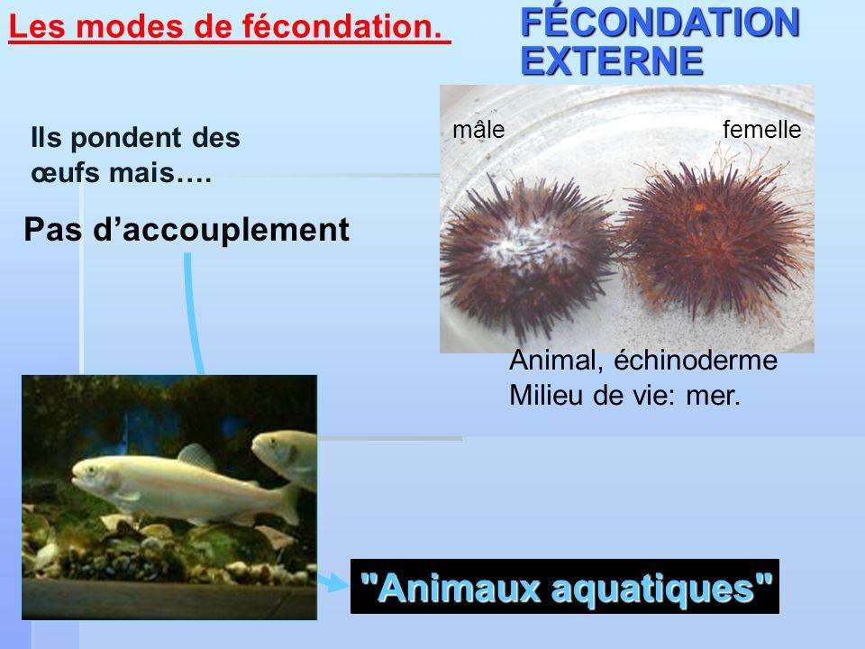 FÉCONDATION EXTERNE Animaux aquatiques Les modes de fécondation.