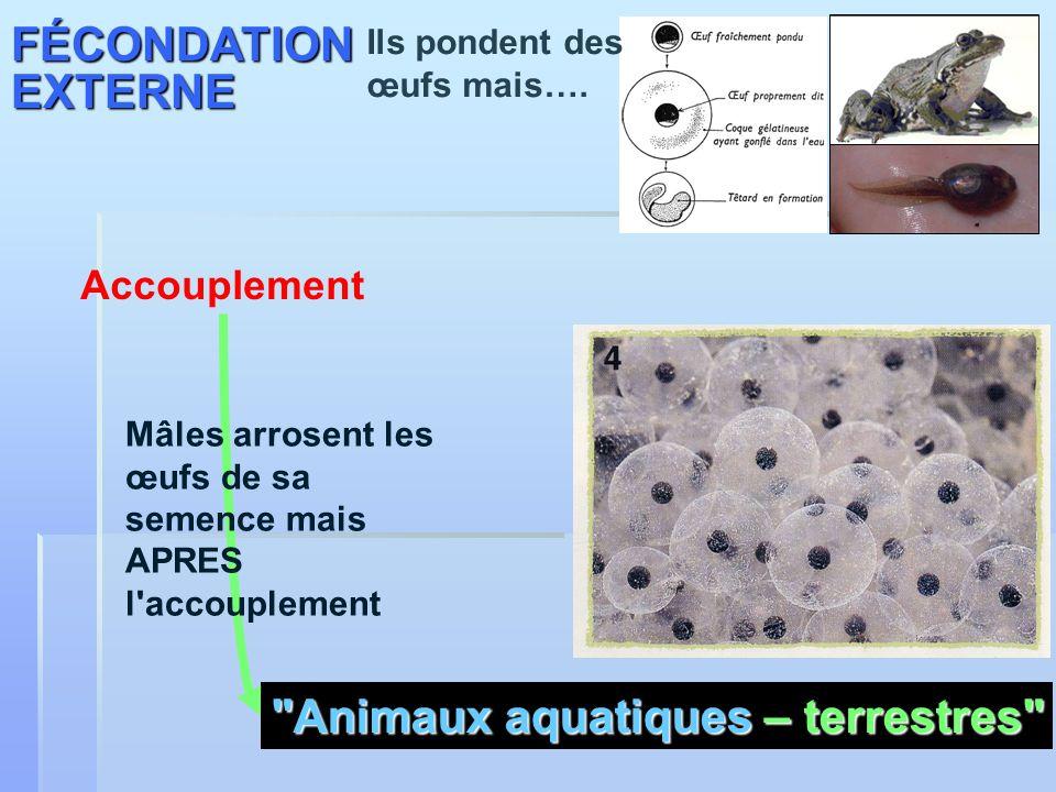 Animaux aquatiques – terrestres