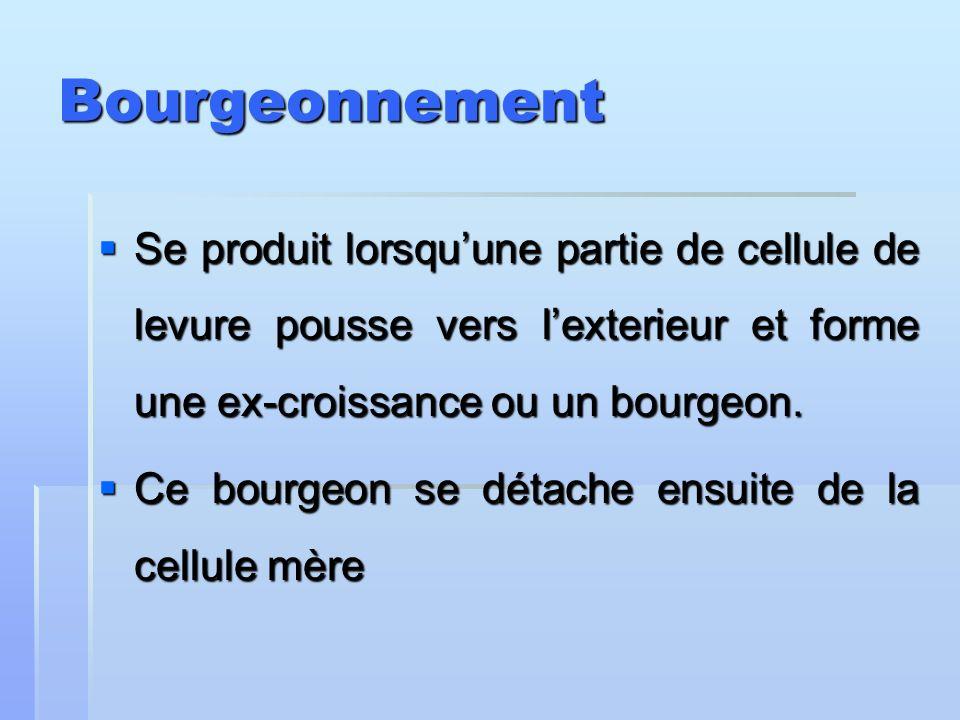 Bourgeonnement Se produit lorsqu'une partie de cellule de levure pousse vers l'exterieur et forme une ex-croissance ou un bourgeon.