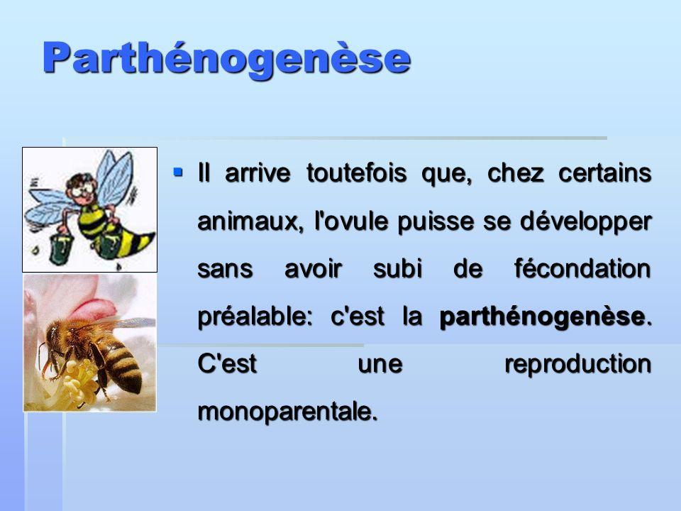 Parthénogenèse