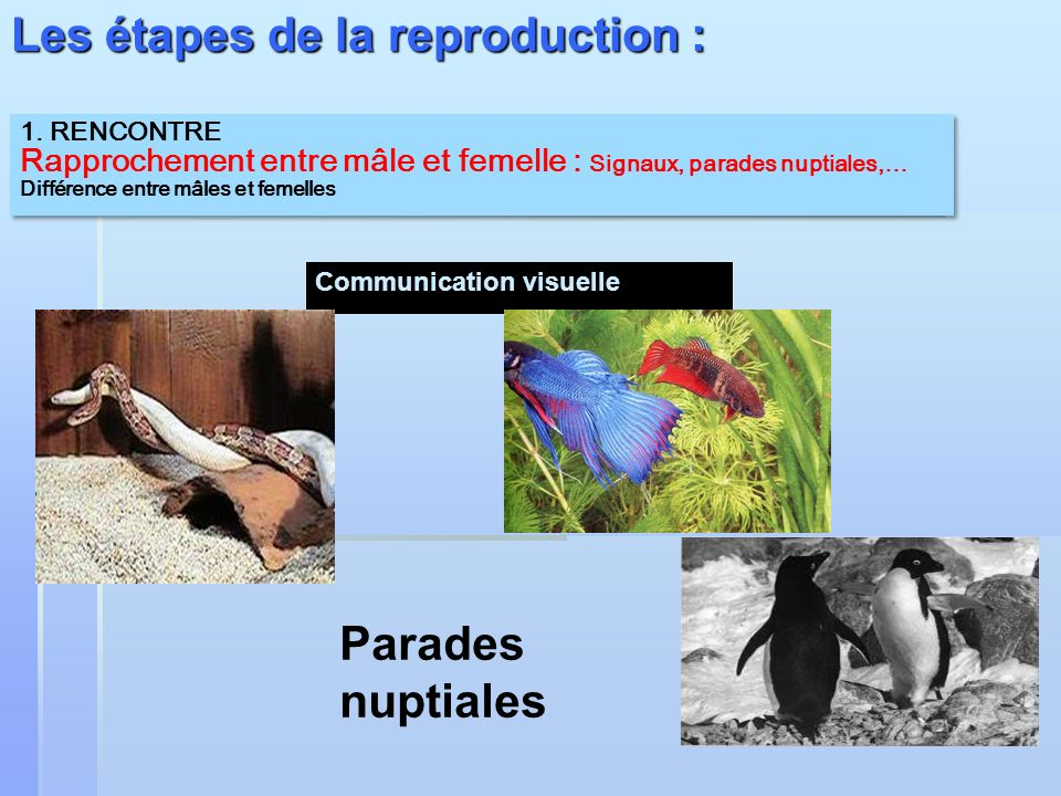 Les étapes de la reproduction :