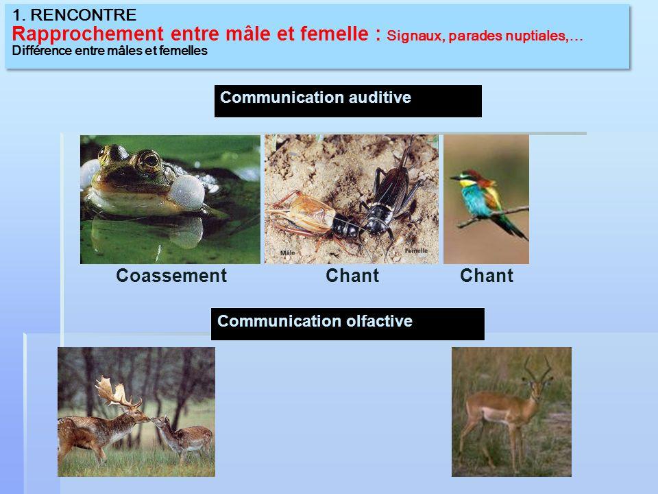 Rapprochement entre mâle et femelle : Signaux, parades nuptiales,…