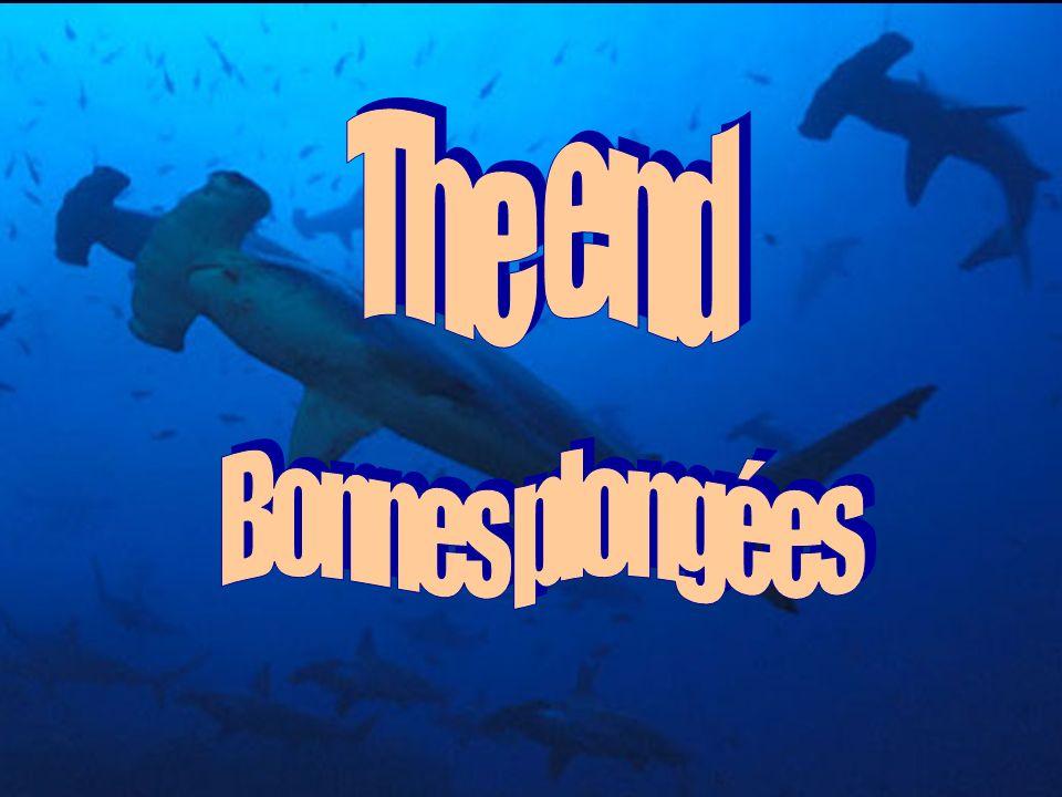 The end Bonnes plongées