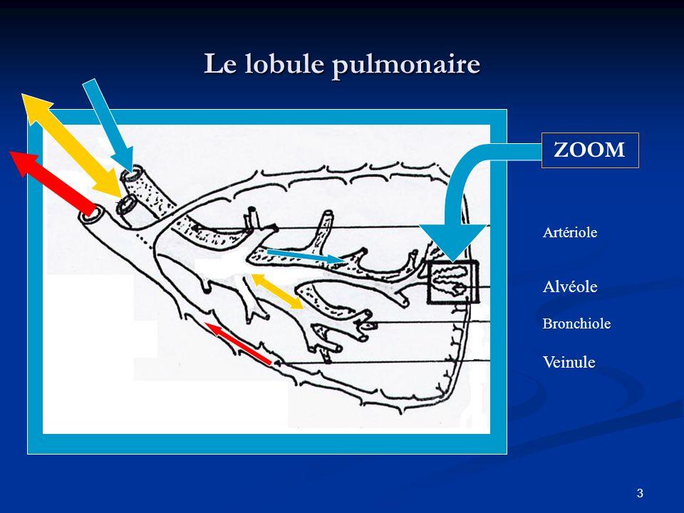 Le lobule pulmonaire Alvéole Bronchiole Artériole ZOOM Veinule