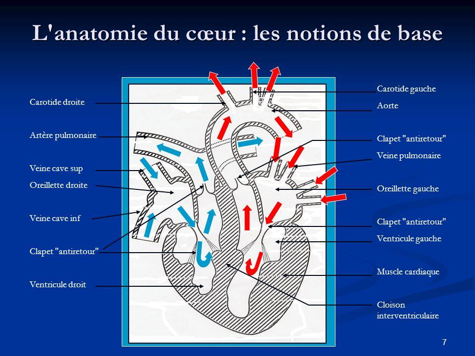 L anatomie du cœur : les notions de base