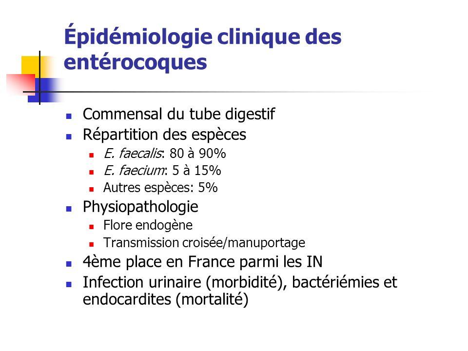 Épidémiologie clinique des entérocoques