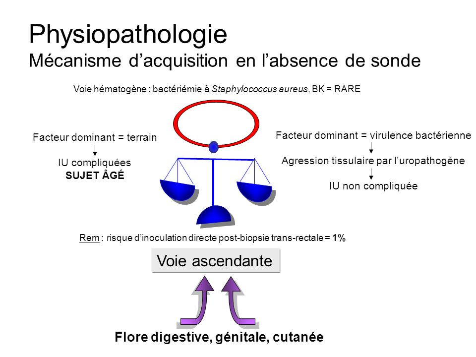Physiopathologie Mécanisme d'acquisition en l'absence de sonde