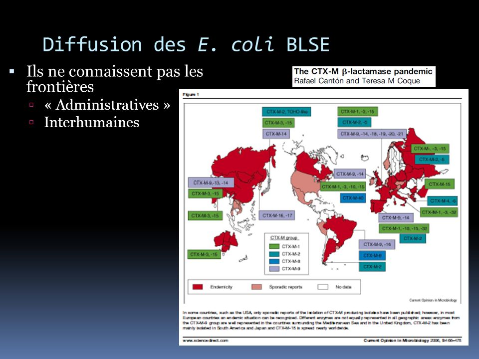 Diffusion des E. coli BLSE