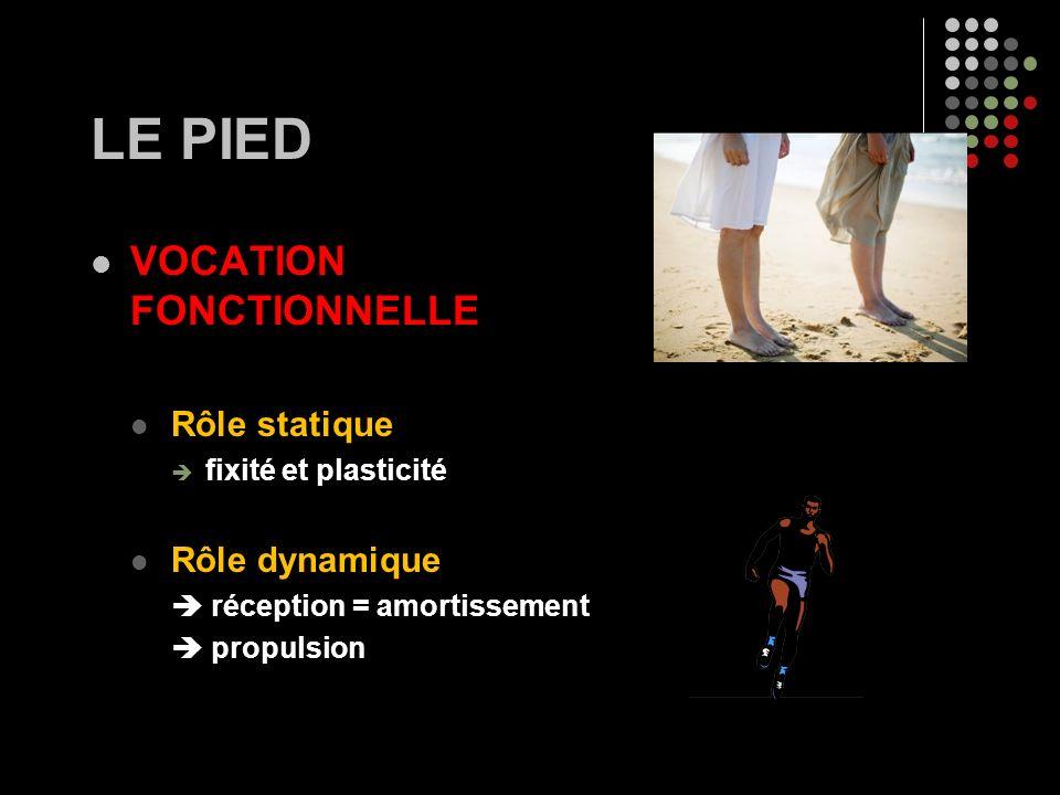 LE PIED VOCATION FONCTIONNELLE Rôle statique Rôle dynamique