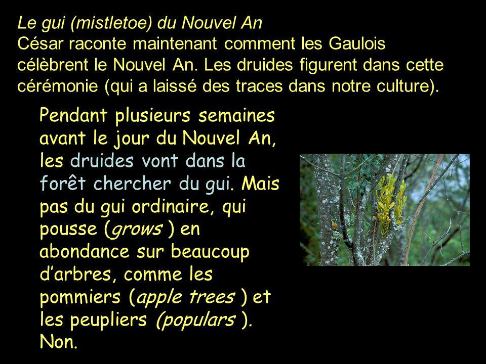 Le gui (mistletoe) du Nouvel An César raconte maintenant comment les Gaulois célèbrent le Nouvel An. Les druides figurent dans cette cérémonie (qui a laissé des traces dans notre culture).