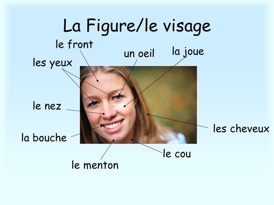 La Figure/le visage le front la joue un oeil les yeux le nez