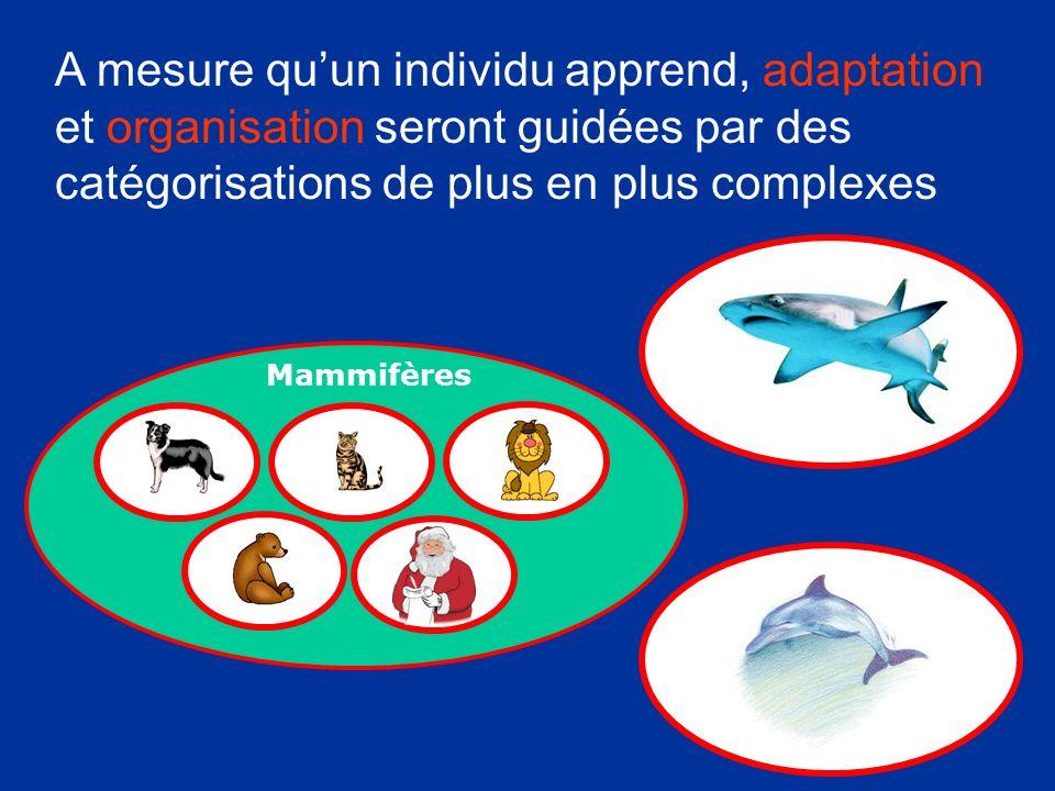 A mesure qu'un individu apprend, adaptation et organisation seront guidées par des catégorisations de plus en plus complexes