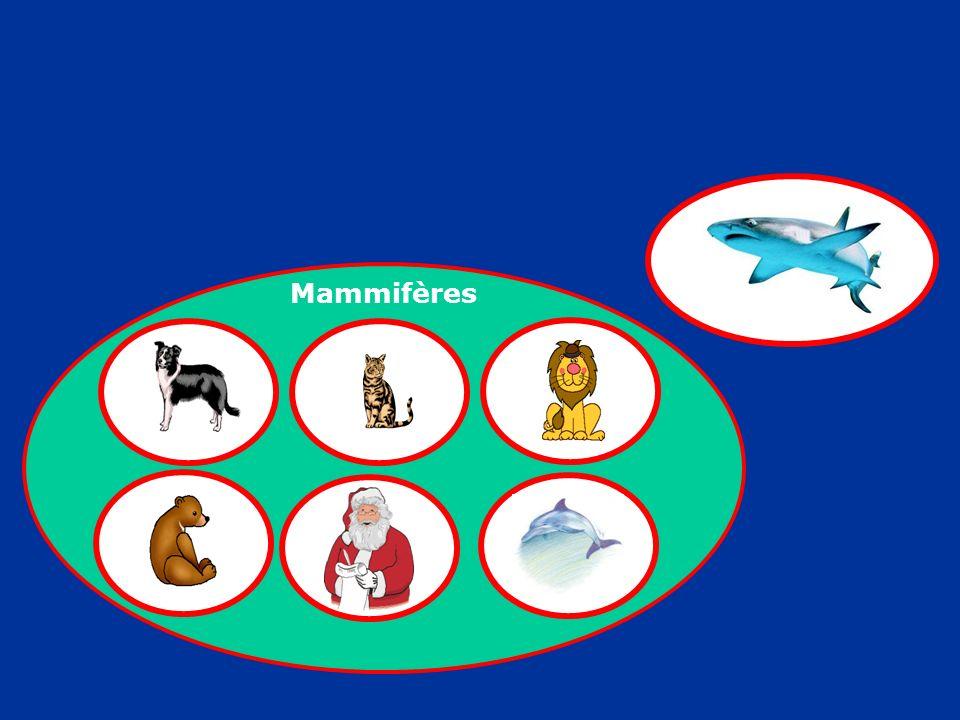 Mammifères