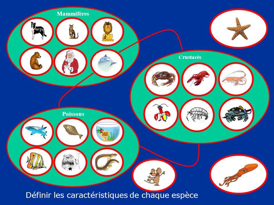 Définir les caractéristiques de chaque espèce