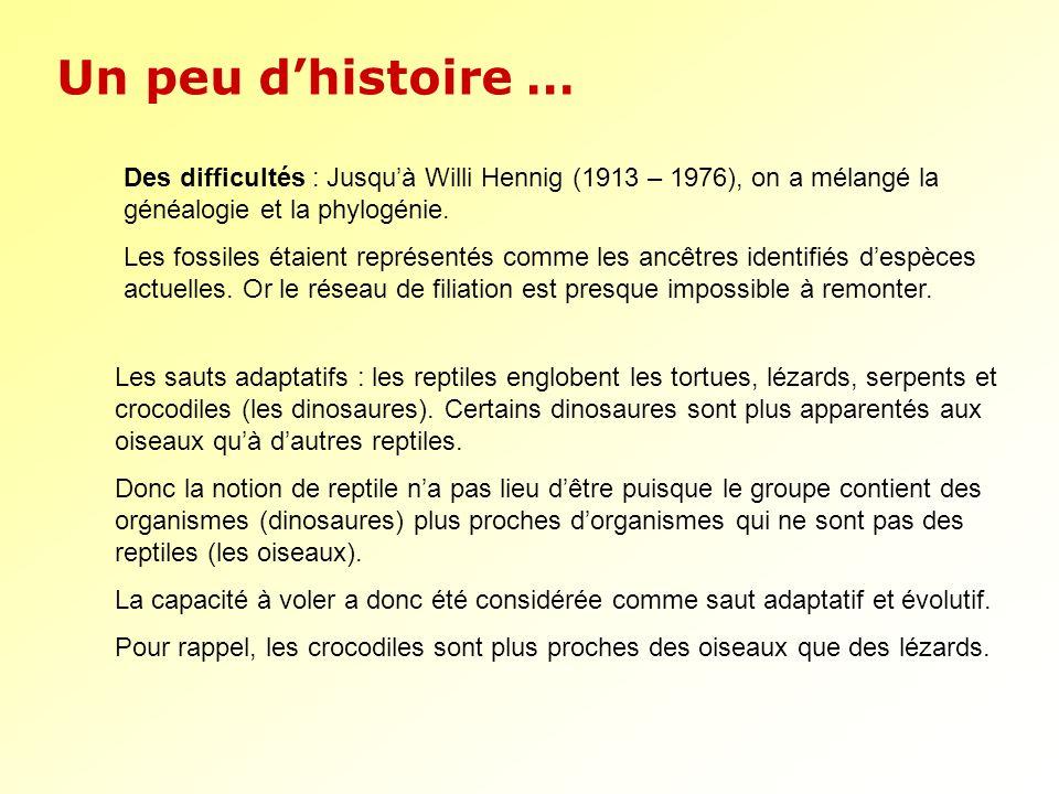 Un peu d'histoire … Des difficultés : Jusqu'à Willi Hennig (1913 – 1976), on a mélangé la généalogie et la phylogénie.