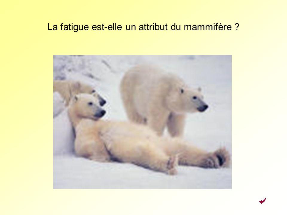 La fatigue est-elle un attribut du mammifère