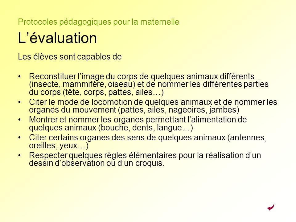 Protocoles pédagogiques pour la maternelle L'évaluation