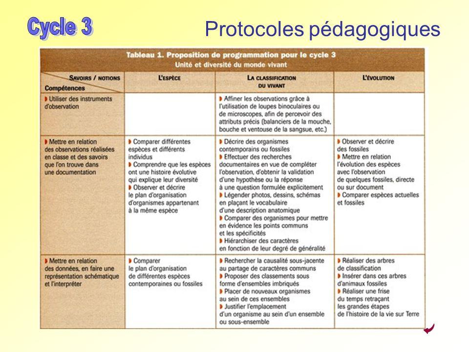 Protocoles pédagogiques