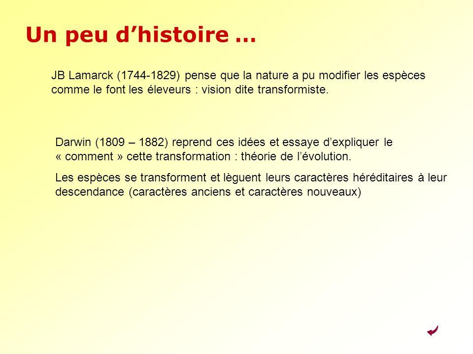 Un peu d'histoire … JB Lamarck (1744-1829) pense que la nature a pu modifier les espèces comme le font les éleveurs : vision dite transformiste.