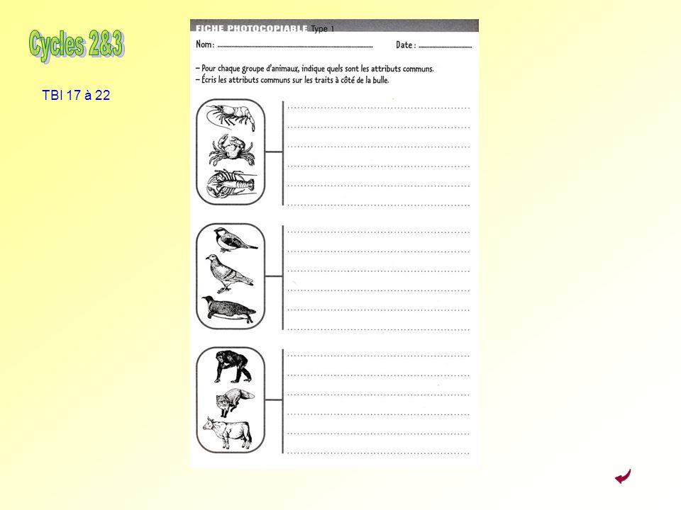 Activité 3 : Classer Cycles 2&3 TBI 17 à 22