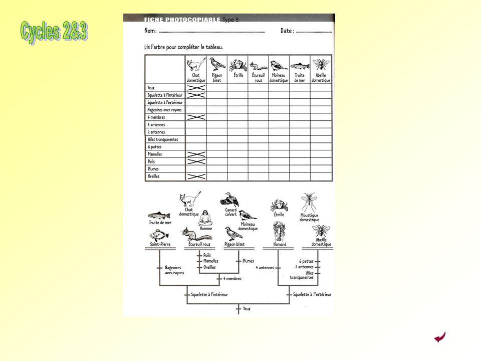 Activité 3 : Classer Cycles 2&3