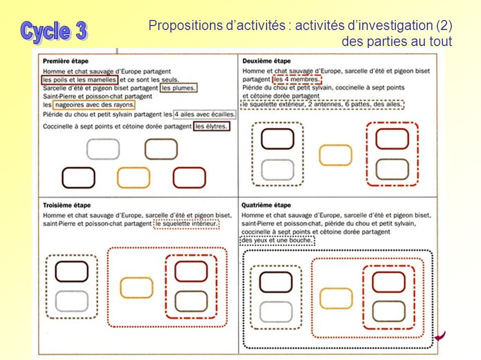 Propositions d'activités : activités d'investigation (2) des parties au tout