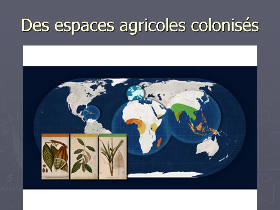 Des espaces agricoles colonisés