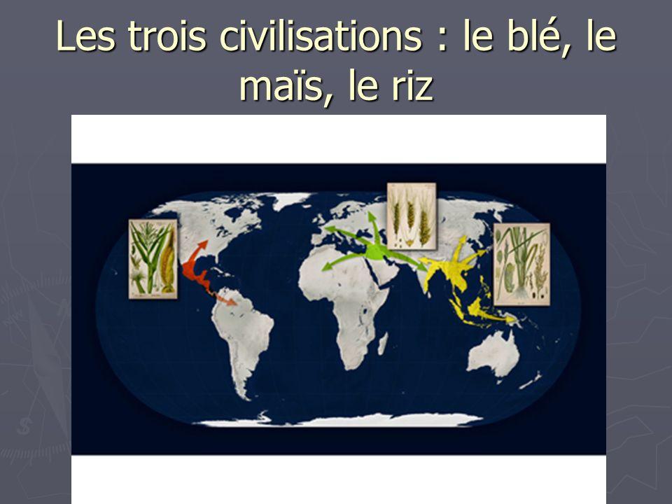 Les trois civilisations : le blé, le maïs, le riz