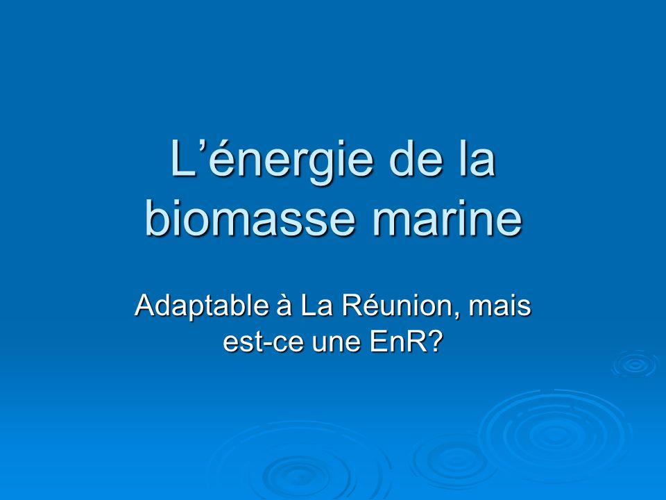 L'énergie de la biomasse marine
