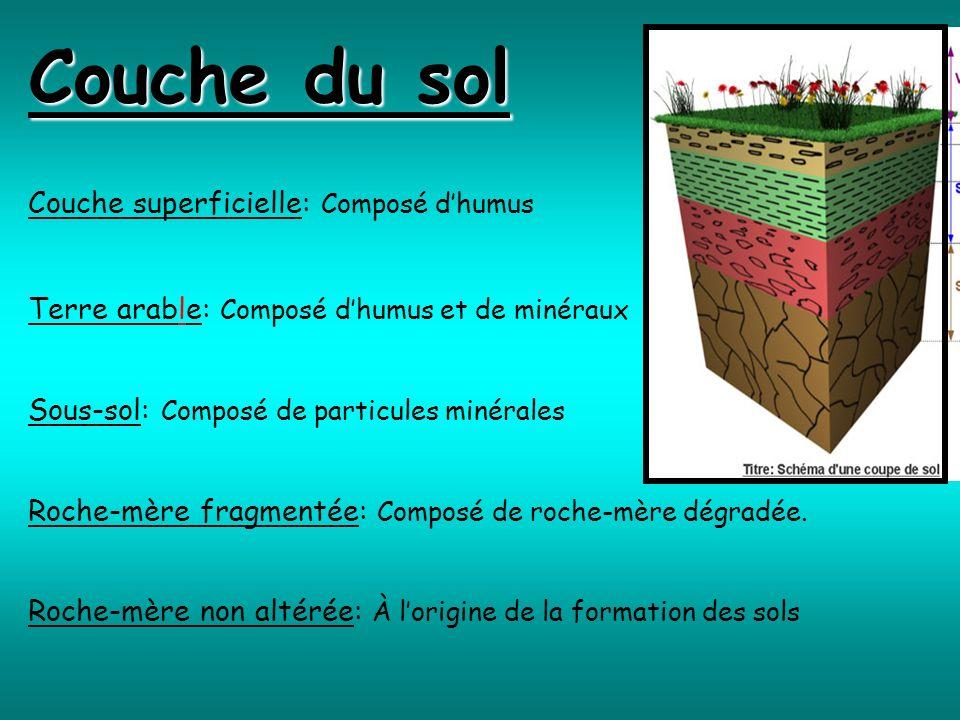 Couche du sol Couche superficielle: Composé d'humus