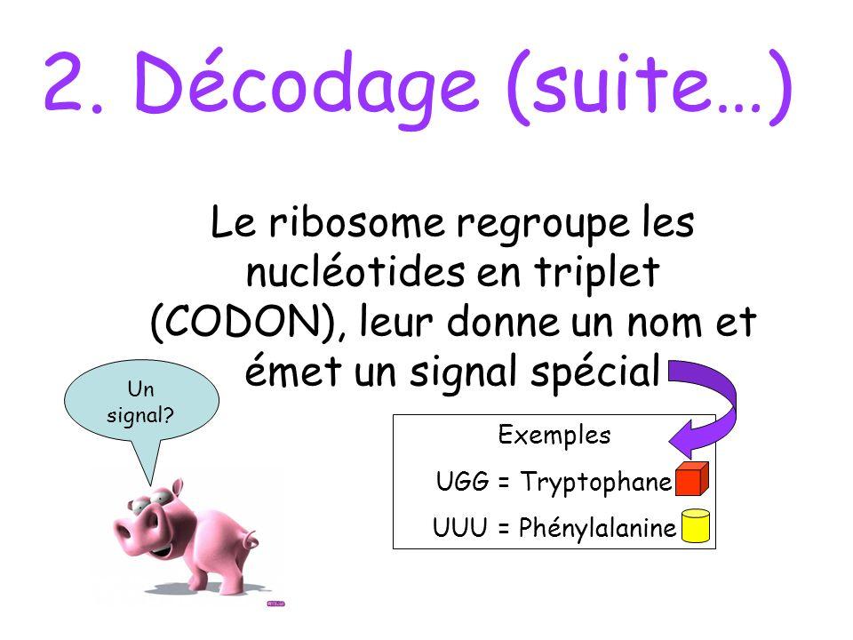 2. Décodage (suite…) Le ribosome regroupe les nucléotides en triplet (CODON), leur donne un nom et émet un signal spécial.