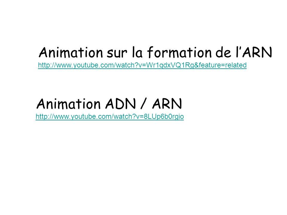 Animation sur la formation de l'ARN