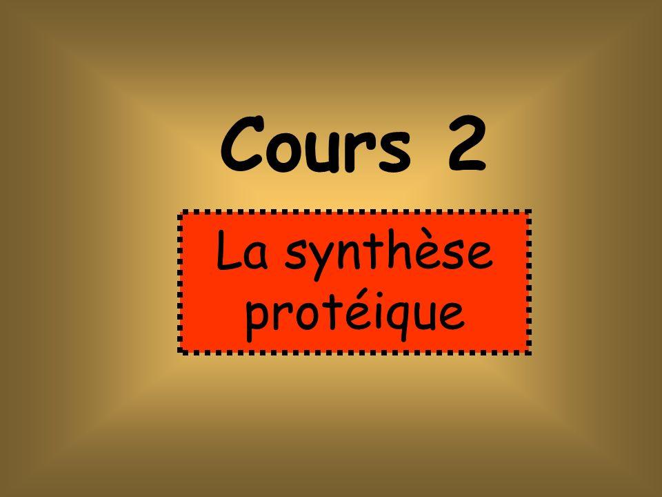 Cours 2 La synthèse protéique