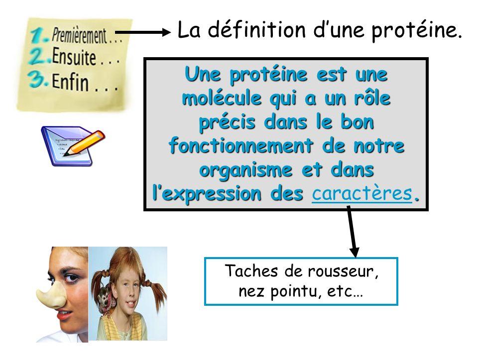 La définition d'une protéine.