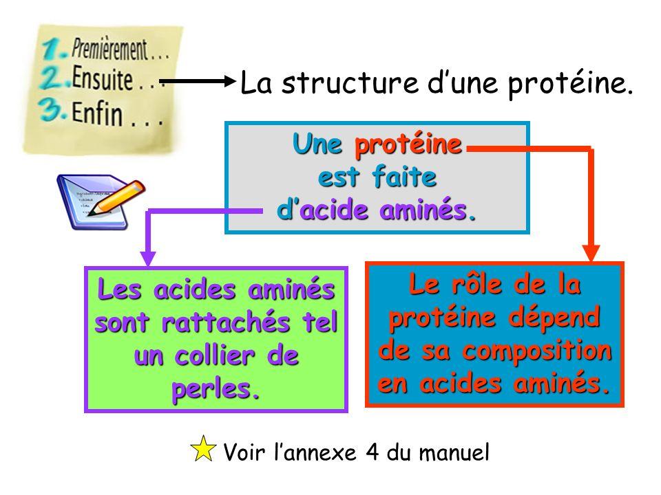 La structure d'une protéine.