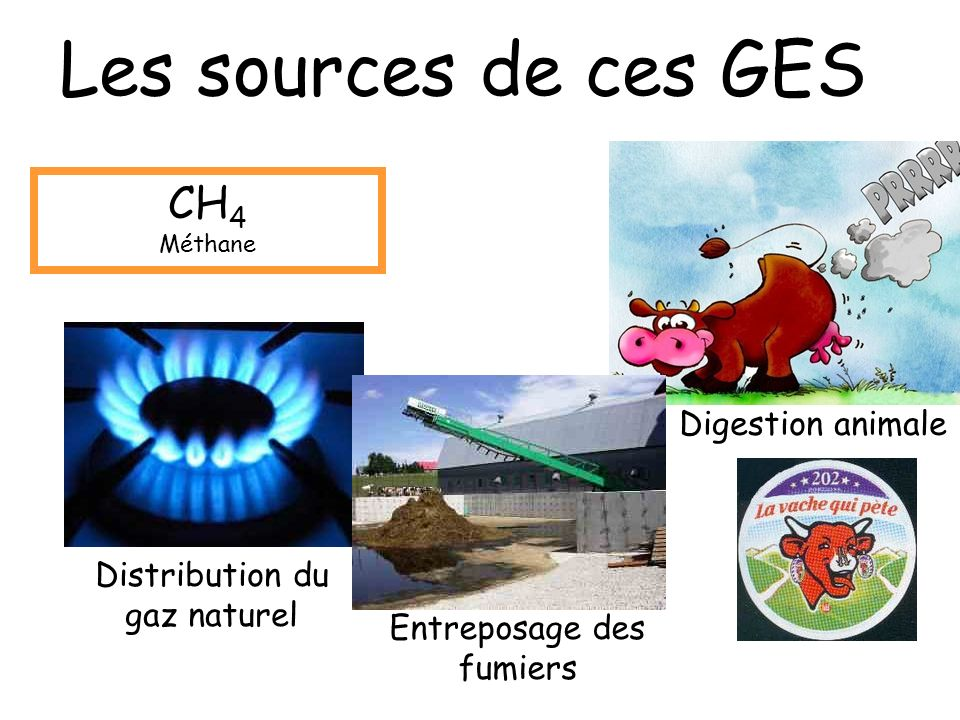 Les sources de ces GES CH4 Digestion animale