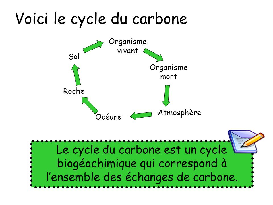 Voici le cycle du carbone