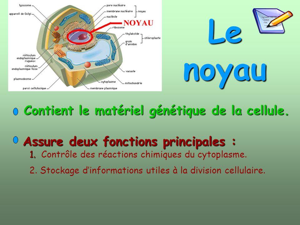 Le noyau Contient le matériel génétique de la cellule.