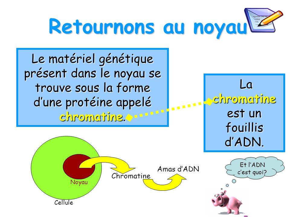 La chromatine est un fouillis d'ADN.