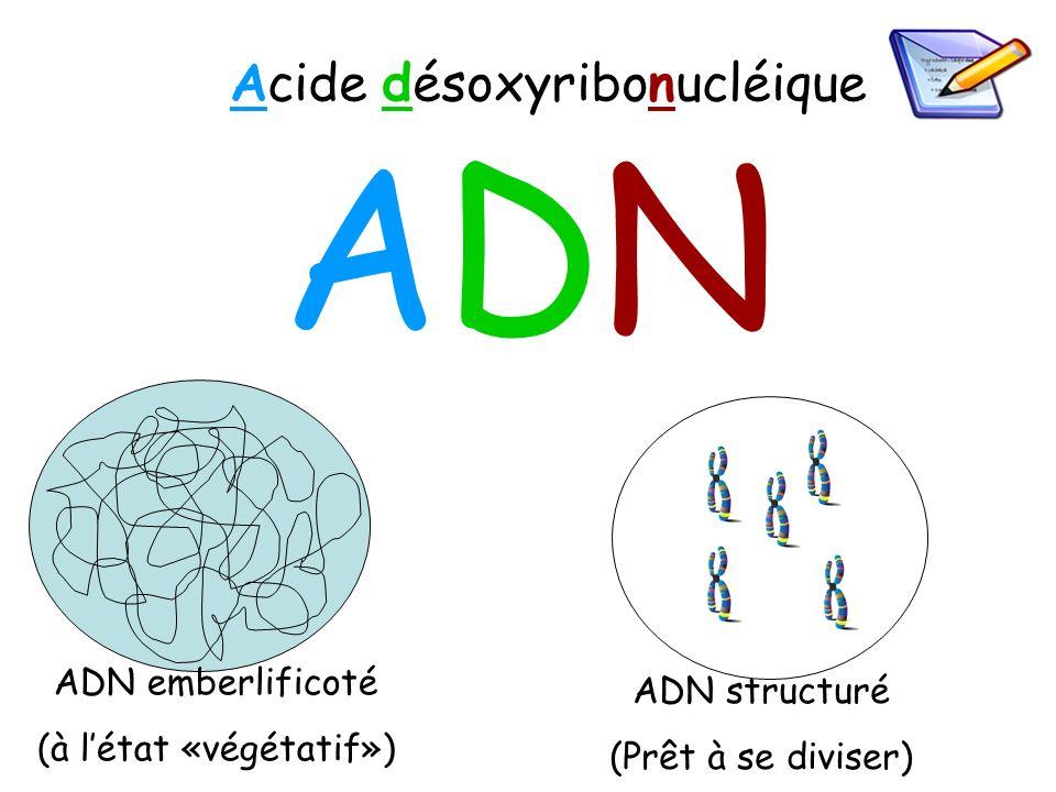 ADN Acide désoxyribonucléique ADN emberlificoté ADN structuré