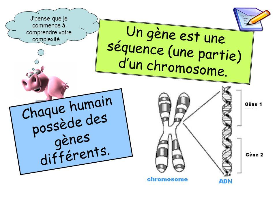 Un gène est une séquence (une partie) d'un chromosome.