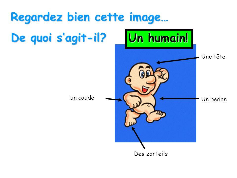 Regardez bien cette image… De quoi s'agit-il Un humain!