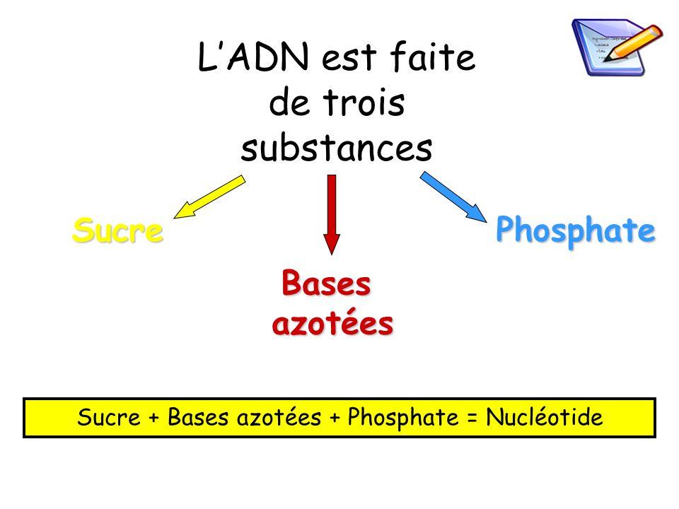 L'ADN est faite de trois substances
