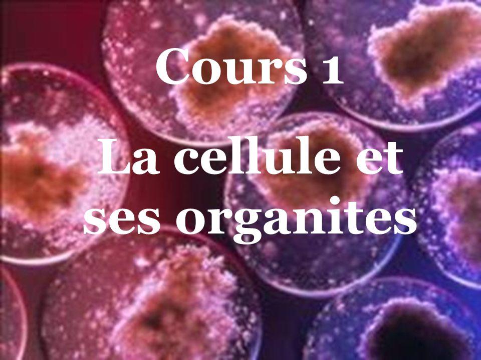 La cellule et ses organites