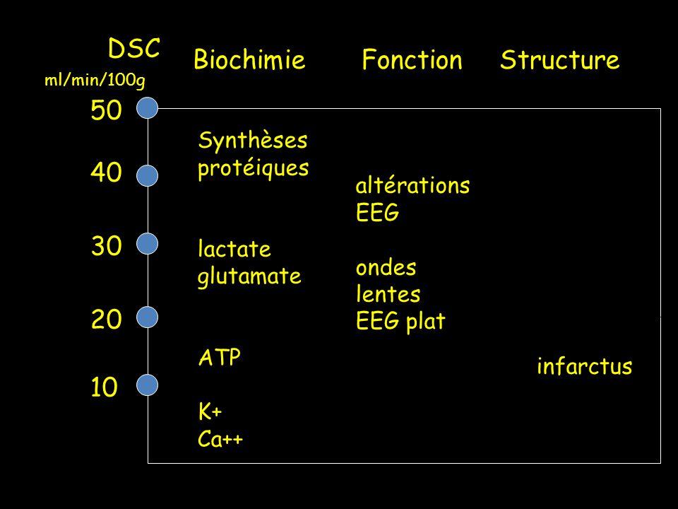 DSC 50 40 30 20 10 Biochimie Fonction Structure Synthèses protéiques