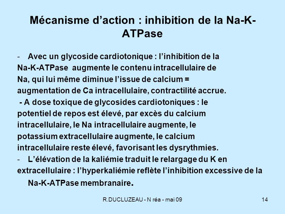 Mécanisme d'action : inhibition de la Na-K-ATPase